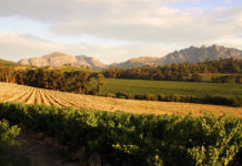 Linton Park Wines really Focus on Sustainability and Conservation!