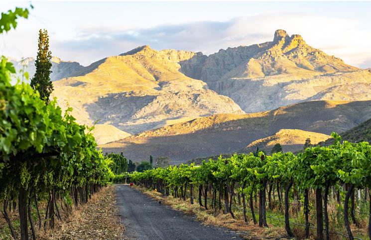 Mymering Wine & Guest Estate